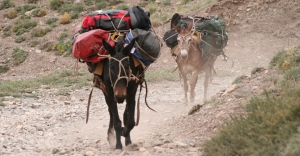 HEADING TO BASE CAMP - ACONCAGUA
