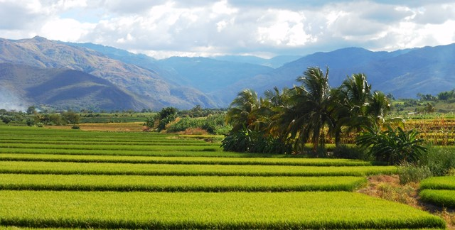 LEAVING BEHIND THE RICE FIELDS OF NORTHERN PERU