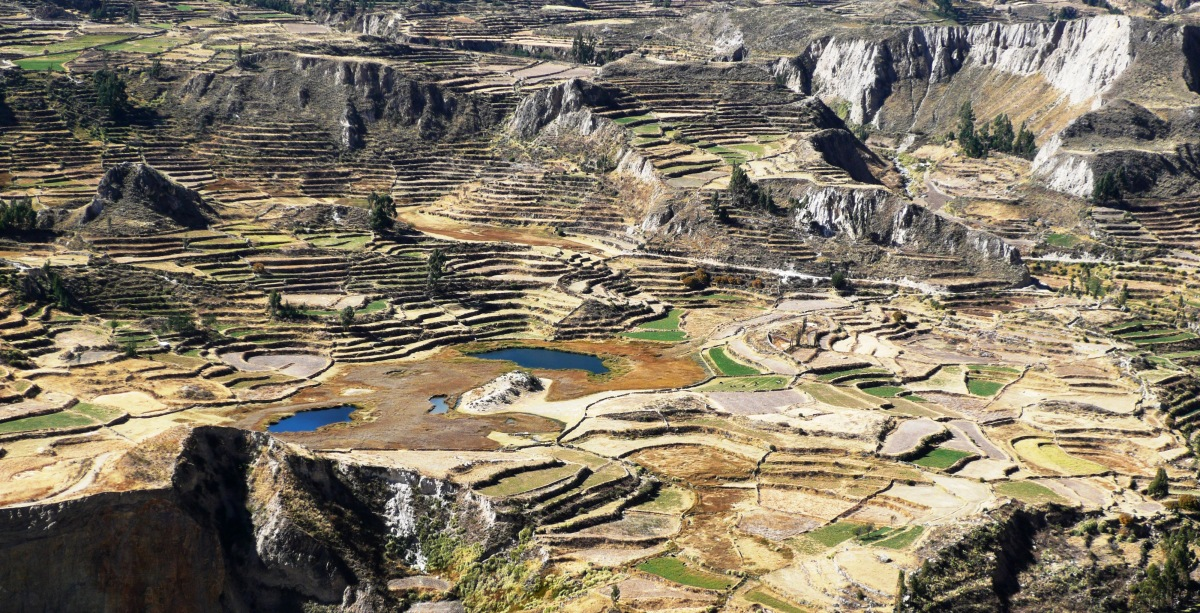 AGRICULTURAL TERRACING, COLCA CANYON, PERU