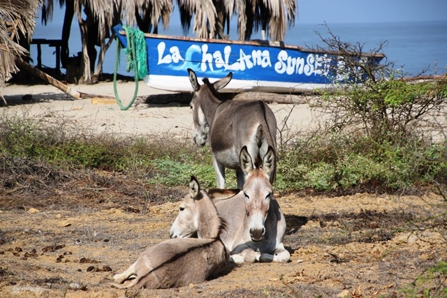 At Casa Grillo even the donkeys take it easy