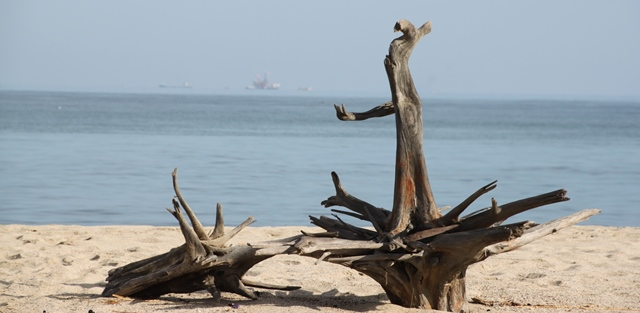 "Beach Art Exhibit no. 1: ""Driftwood"""