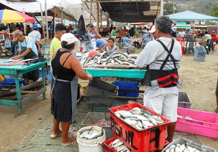THE FISH MARKET ON THE BEACH AT PUERTO LOPEZ.
